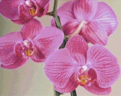 Pixelhobby 16 Platen Orchidee Het Kralendorp Goedkope Kralen